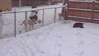 Dog Gone Wild