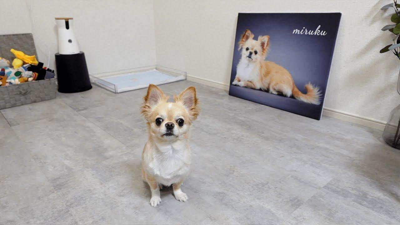 自分の写真を部屋に飾ったら別の犬と勘違いしてこうなりましたwww
