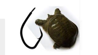 Виды рыболовных крючков, крючки для ловли черепах, доставка бесплатно в почтовый ящик, без трека, по