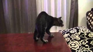 猫 生後4ヶ月 謎の動き