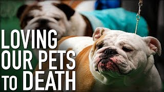 Is Owning Pets Cruel? Is Breeding Them Problematic?