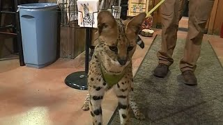 SAFARI WEST:  Sonoma County famed Safari West wildlife reserve reopens after surviving the wine coun