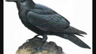 Des Teufels Lockvögel - Rabenballade