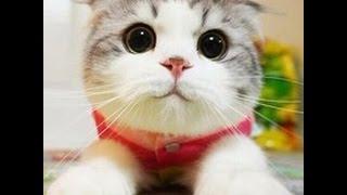 Смешное видео с кошками. Самое лучшее! Прикольные котята!