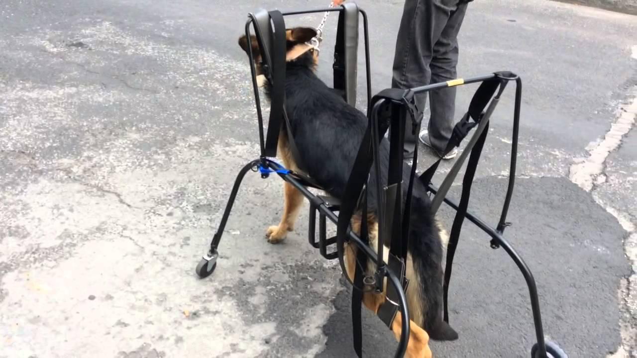 Carrito de 4 ruedas para perro youtube for Carritos para perros