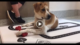 WSHS Kids' Corner - Humane education series - dog senses