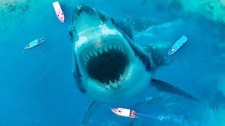 Sei froh, dass diese 10 furchterregenden Tiere ausgestorben sind
