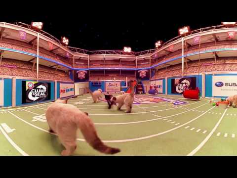Kitten Bowl 360° - Countdown to the Big Game - Hallmark Channel