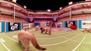 Kitten Bowl 360° - Countdown to the Big Game - Hallmark Channel thumbnail