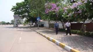 Lagerstroemia speciosa on Avenue Lane Xang, Vientiane, Laos