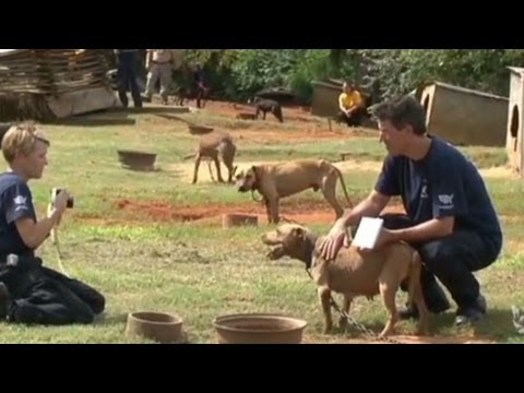 367 dogs rescued in massive dogfighting bust