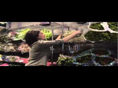 Flower Market | New York City | Design Tips | Iris Rosin