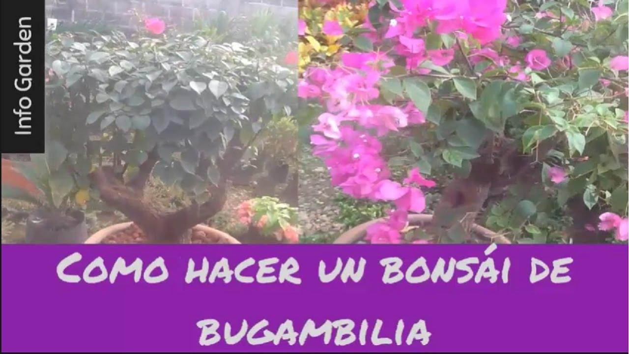 Como hacer un bons i de bugambilia buganvillas y su - Como poner molduras de escayola ...