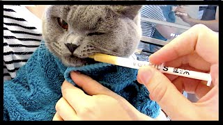 ANNUAL CAT INJECTIONS AND CATCHING DRAGON FLIES | CHRIS & EVE