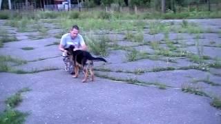 Начальное обучение собаки компаньона