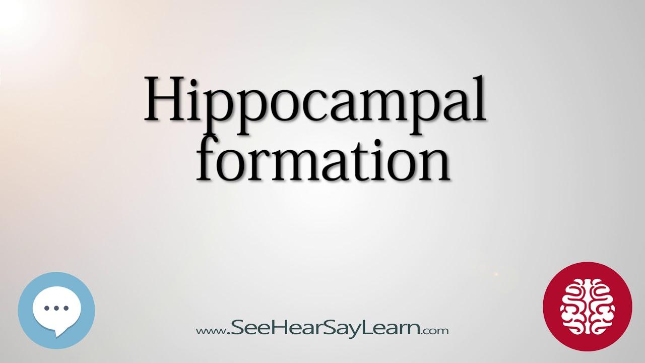 Hippocampal formation Anatomy of the Brain SeeHearSayLearn - YouTube