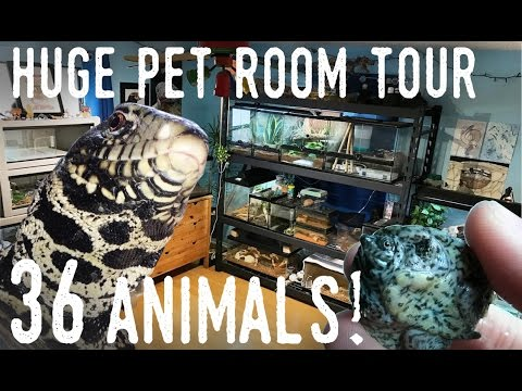 Reptile Room Tour December 2016 | New TEGU and TINY Turtles!