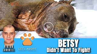 Hope Rescues Betsy the Pit Bull Who Didn't Want to Fight! - @Viktor Larkhill Extreme Rescue