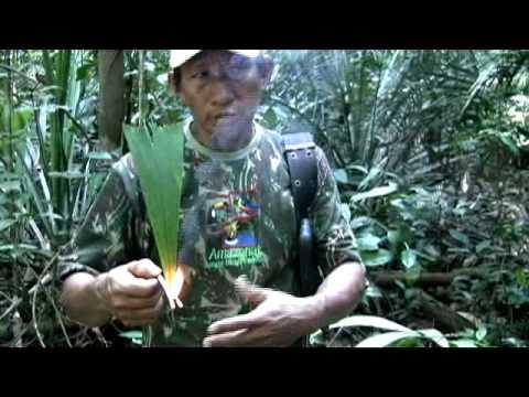 Amazon Eco Tourism Travel from Amazonat Ecolodge