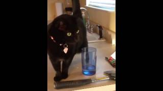 The only way my cat will Drink water Thumbnail