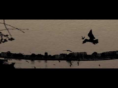 Клип Doves - Blackbird