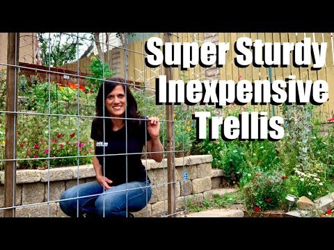 Making a Super Sturdy, Easy, Inexpensive Trellis to Maximize Garden Space & Planting Cucumbers
