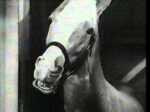 "Tostitos ""Mr. Ed The Talking Horse"" Commercial (1985)"