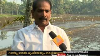 Drought in Kerala will affect paddy farming in Upper kuttanad