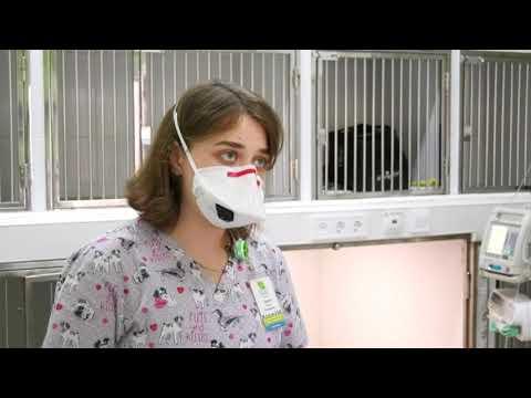 Труять та викидають на вулицю: українці через страх перед коронавірусом масово позбавляються тварин