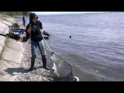 Рыбалка на фидер видео на сазана