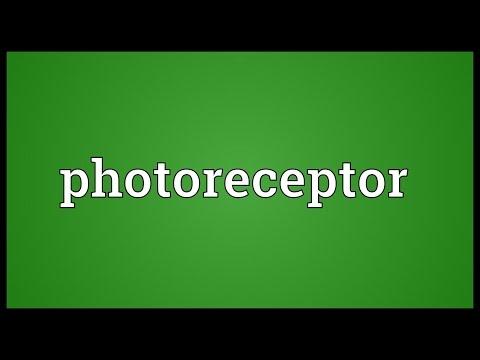 Header of photoreceptor