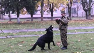 Посещение кинологического центра Вооруженных Сил Республики Беларусь