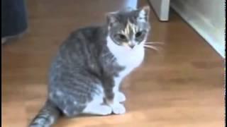 Pisica beata razi cu lacrimi
