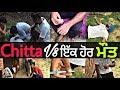 ਚਿੱਟਾ vs ੲਿੱਕ ਹੋਰ ਮੌਤ ! Chitta vs Ik Hor Mout●Pindan Aaley●Watch Real Story