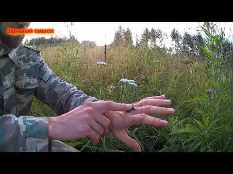 """Остановить кровь природными средствами """"Солдатская трава"""""""
