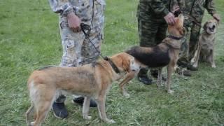 62 я - выставка охотничьих собак в Тамбове. 14 мая 2017