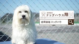 小型犬専門のブリーダーショップドッグハウス翔。 チワワ、ポメラニアン...