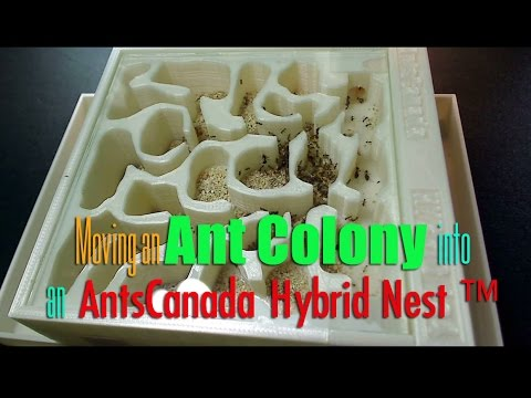moving an ant colony