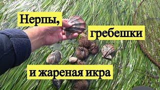 Нерпы, гребешки и жареная икра / Seals, scallops & fried fish eggs
