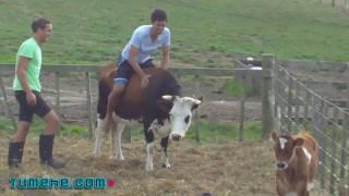 Wild Bull Riding