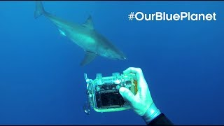 The Man Who Swims Towards Sharks |  #OurBluePlanet | BBC Earth thumbnail