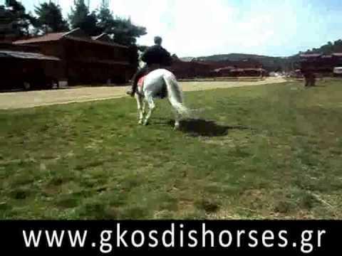 ΑΛΟΓΑ ΓΚΟΣΔΗΣ ,Spanish horse, Gkosdis Horses - Ισπανικό Άλογο