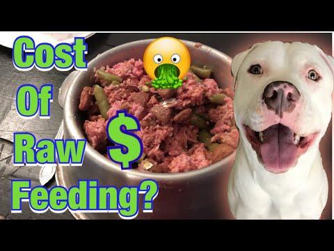Raw Diet for Pitbulls! Pitbull transition raw food feeding!
