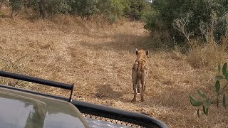Leopards, cubs, Lions and Hyenas. *Spoiler alert* one of them died.