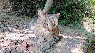 木陰で涼もうとしたら、猫達も休憩していた