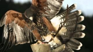 Anti-Turbulence System Inspired By Birds | RMIT University