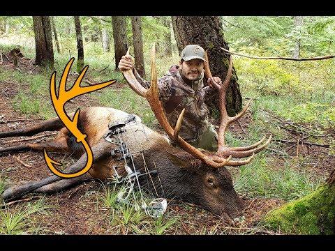 caza-mayor-con-arco-parte-2-|-caza-y-pesca