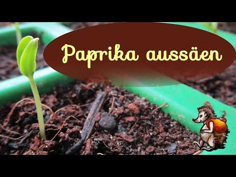Paprika aussäen │Parika vorziehen für den Garten │ Paprikasamen │ Paprikasorten