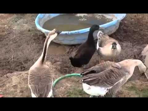 Quaking good morning!