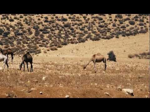 Jordan: Land and People - Documentary